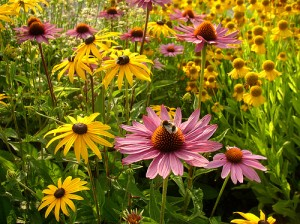 apts utah: flowers1