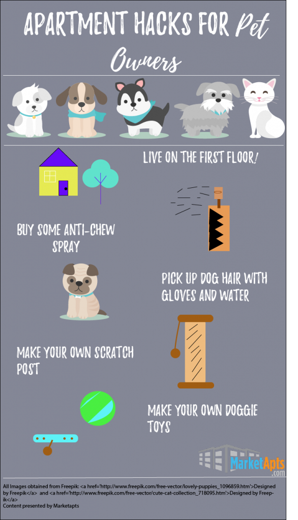 Five Apartment Hacks for Pet Owners