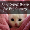 Apartment Tips for Pets